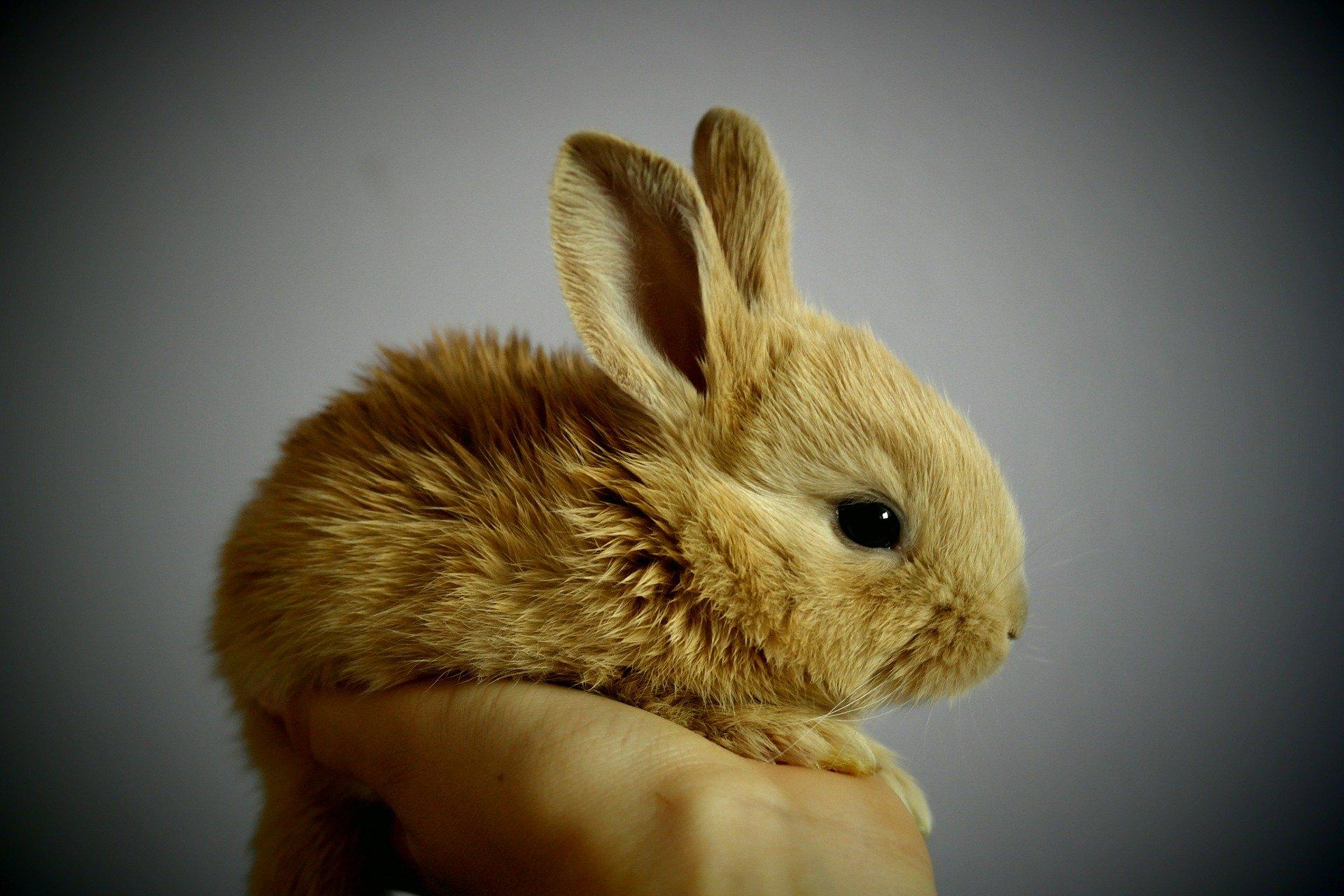 kaninchenpflegetipps.de